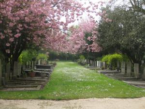 Graspad+bloeiende prunus